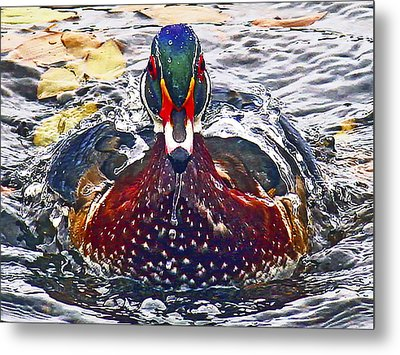 Straight Ahead Wood Duck Metal Print by Jean Noren