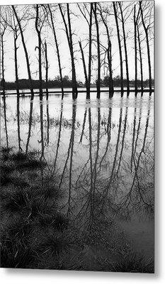 Stranded Trees Metal Print