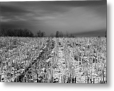 Straw Fields Metal Print by Brian Sereda