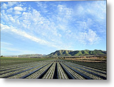 Metal Print featuring the photograph Strawberry Fields Forever 2 by Floyd Snyder