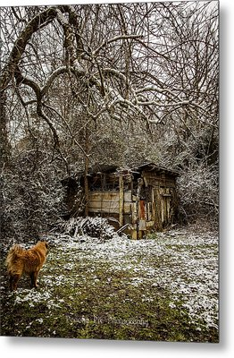 Stray And Decay Metal Print by Stacy Sikes
