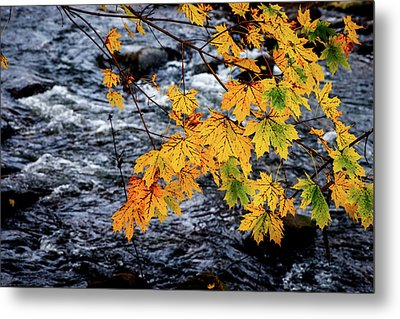 Stream In Fall Metal Print