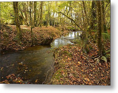 Stream In The Woods Metal Print by Martina Fagan