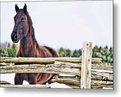 Metal Print featuring the photograph Strength by Traci Cottingham
