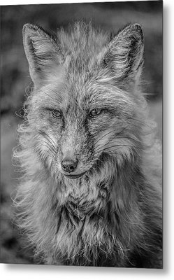 Striking A Pose Black And White Metal Print