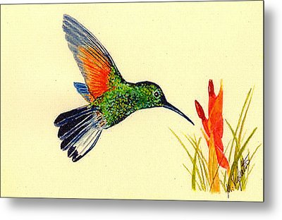 Stripe Tailed Hummingbird Metal Print by Michael Vigliotti
