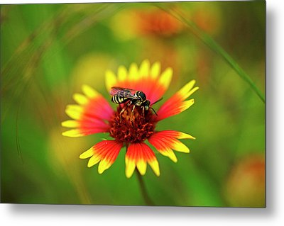 Striped Wasp Metal Print by Bill Morgenstern