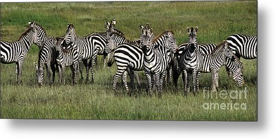 Stripes - Serengeti Plains Metal Print