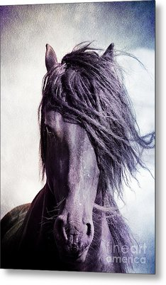 Strong Friesian Stallion Metal Print by Jan Brons
