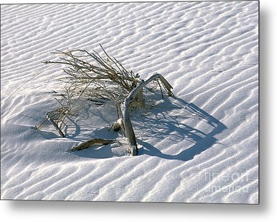 Struggle To Survive Metal Print by Sandra Bronstein