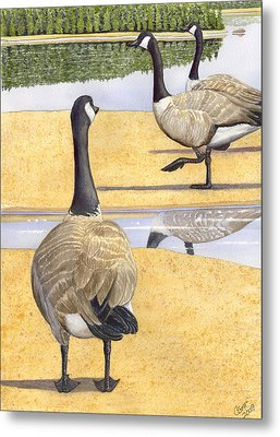 Struttin Thier Stuff Metal Print by Catherine G McElroy