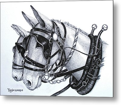 Stubborn As A Missouri Mule Metal Print