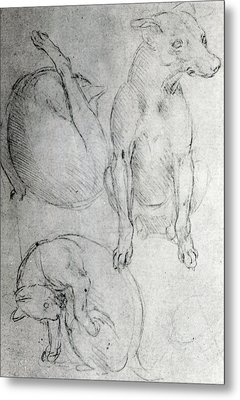 Study Of A Dog And A Cat Metal Print