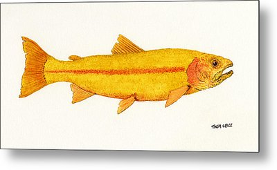 Study Of A Golden Rainbow Trout Metal Print by Thom Glace