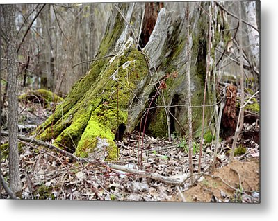 Stump With Moss Metal Print by Sean Seal