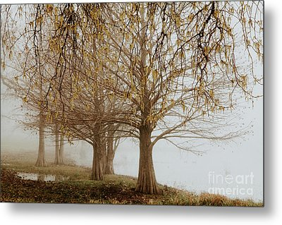 Metal Print featuring the photograph Sublime by Iris Greenwell