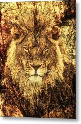 Subtle Lion Metal Print