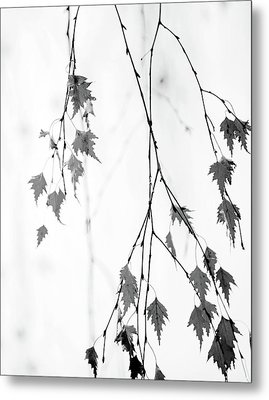 Metal Print featuring the photograph Subtle by Rebecca Cozart
