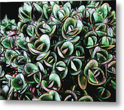 Succulent Fantasy Metal Print by Ann Powell