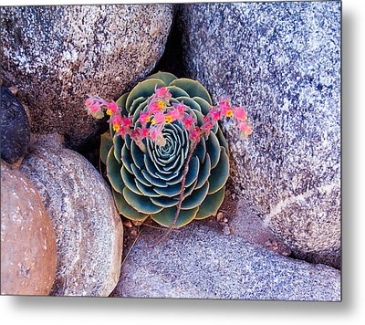Succulent Flowers Metal Print by Mark Barclay