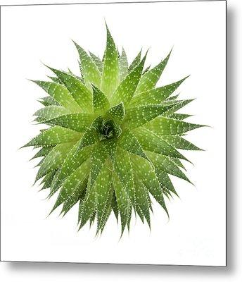 Succulent Plant Metal Print