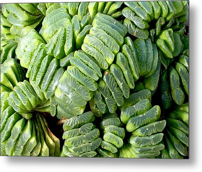 Succulents Metal Print