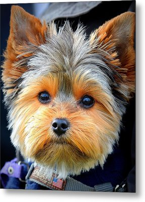 Such A Face Metal Print by Barbara Dudley