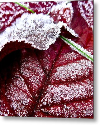 Sugar Coated Morning Metal Print by Gwyn Newcombe