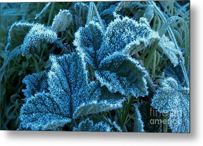 Metal Print featuring the photograph Sugar Ivy by Garnett  Jaeger