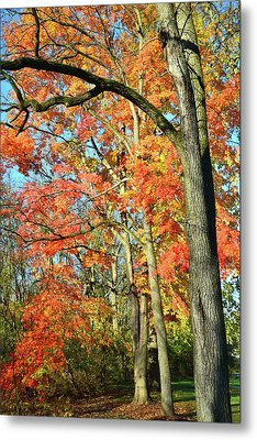 Metal Print featuring the photograph Sugar Maple Stand by Ray Mathis