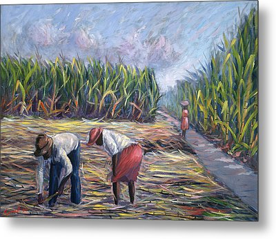 Sugarcane Harvest Metal Print by Carlton Murrell
