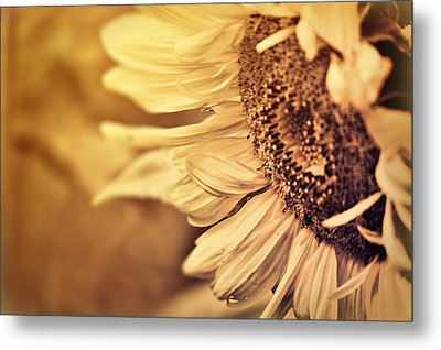 Metal Print featuring the photograph Summer Afternoon by Douglas MooreZart