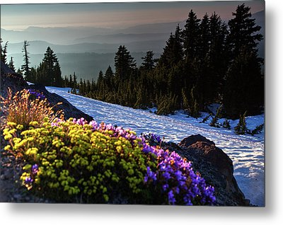 Metal Print featuring the photograph Summer And Winter by David Chandler