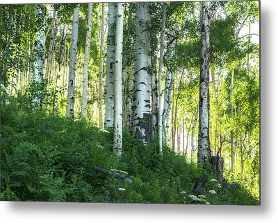 Metal Print featuring the photograph Summer Aspen Forest by Tim Reaves
