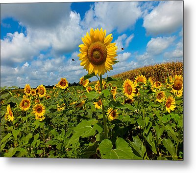 Summer At The Farm Metal Print