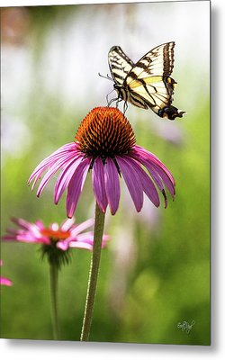 Metal Print featuring the photograph Summer Colors by Everet Regal