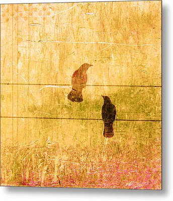 Summer Crows Metal Print by Carol Leigh