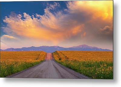 Metal Print featuring the photograph Summer Fantastic by Tim Reaves