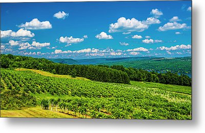 Metal Print featuring the photograph Summer Fields by Steven Ainsworth