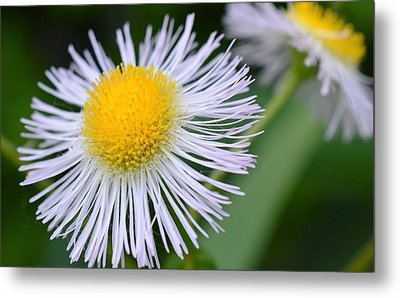 Summer Flower Metal Print