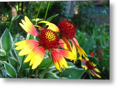 Metal Print featuring the photograph Summer Flowers 3209 by Maciek Froncisz