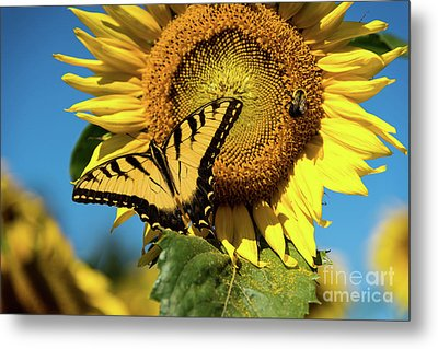 Summer Friends Metal Print by Sandy Molinaro
