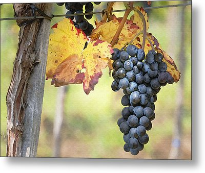 Summer Grapes Metal Print by Sharon Foster
