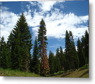 Summer Hike Metal Print by Sheryl Burns