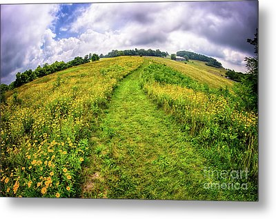 Metal Print featuring the photograph Summer Hike Through Blue Ridge Flowers by Dan Carmichael