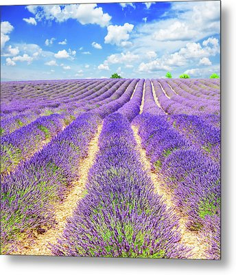 Summer In Provence Metal Print by Anastasy Yarmolovich