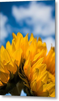 Summer Joys Metal Print by Shelby Young