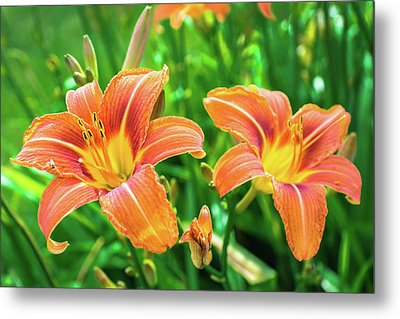 Metal Print featuring the photograph Summer Jubilation by Bill Pevlor