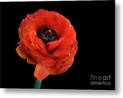 Metal Print featuring the photograph Summer Orange by Darren Fisher