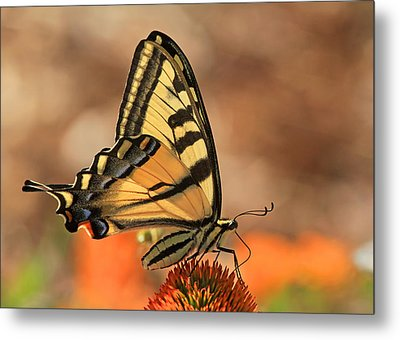 Summer Portrait Metal Print by Donna Kennedy